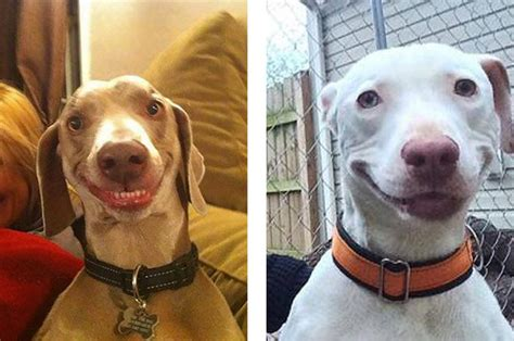 pictures of dogs smiling 21 pictures of dogs smiling that prove the world is a place