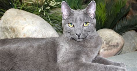 8 Tips On Grooming Your Cat by Purr N Pooch Pet Resorts Tips On Grooming Your Cat From