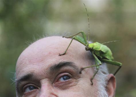 insetto stecco alimentazione quel ramo si muove un mondo di insetti stecco focus it