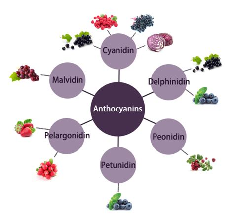 anthocyanins in health and disease books 2 2 what are blackcurrant fruit and anthocyanins
