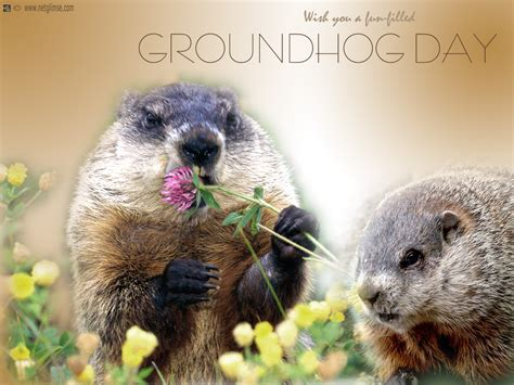 groundhog day anime groundhog day wallpapers hd