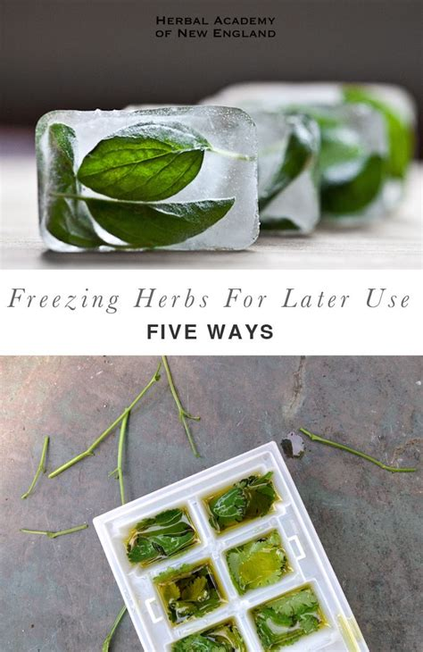1000 ideas about freeze herbs on pinterest freezing fresh herbs freeze and preserves