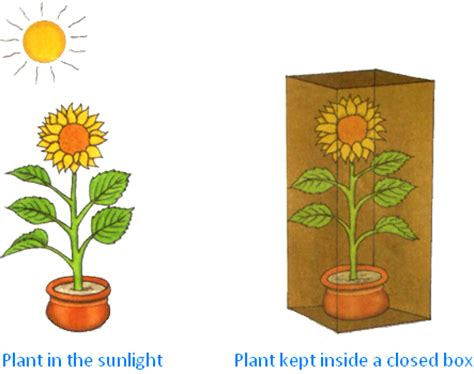 which plants can survive without sunlight which plants can survive without sunlight 28 images