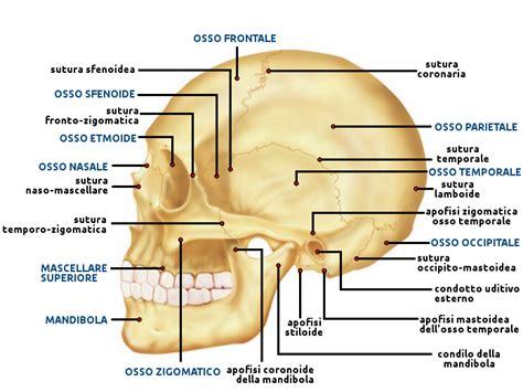 dolore parte destra testa collo i linfonodi collo mascelle o mandibole