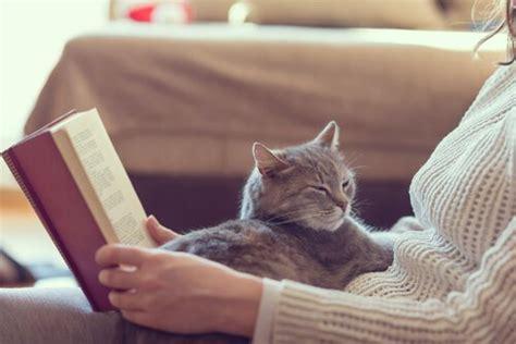 gatos en casa 10 beneficios de tener un gato en casa mis animales