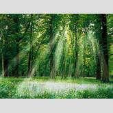 Forest Images   World Forest Day   World Forestry Day   World Forestry ...