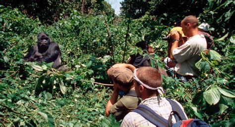 imagenes de hábitats naturales poblaciones de gorilas en los h 225 bitats naturales