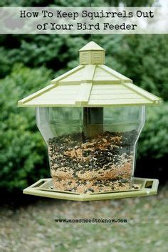 how to keep squirrels out of flower beds birds and their things on pinterest