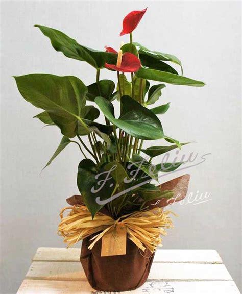 plantas florales de interior plantas florales de interior gerbera planta with plantas