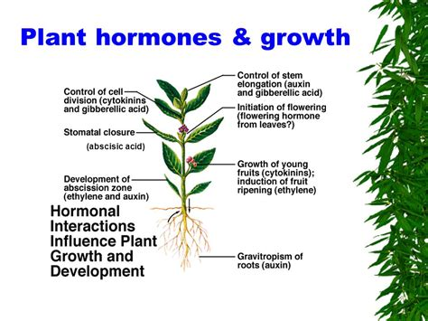 Questions Answers Plants gk questions and answers on biology plant hormones