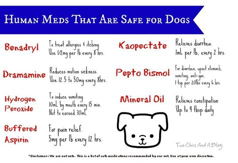 medicine safe for dogs human meds that are safe for dogs kentucky at