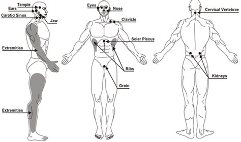 public area in body parts parts of the body that can be used as weapons target