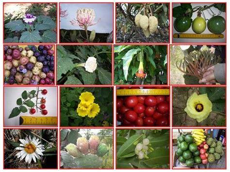 botanica fanerogamica authorstream