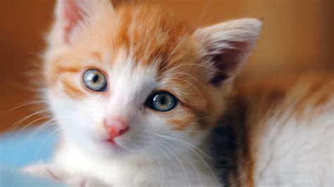 wallpaper bintang kucing wallpaper kucing lucu bangiz