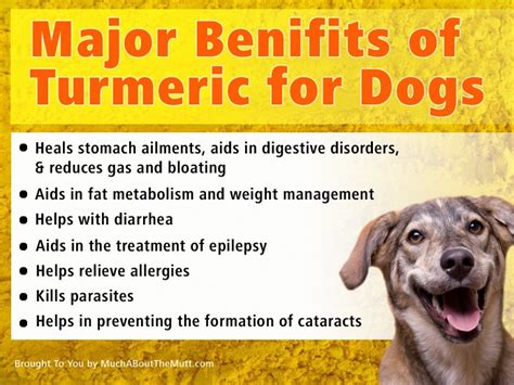 turmeric for dogs pin by woodring on pets