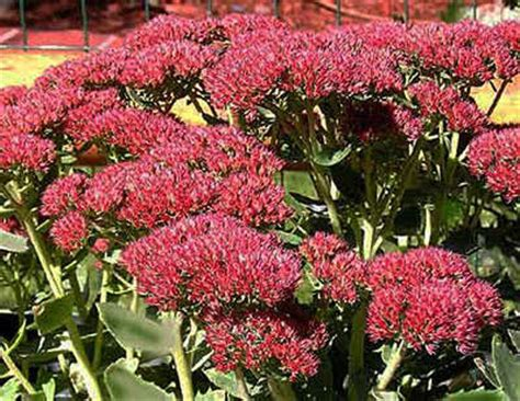 fall blooming plants zone 5 high altitude gardening blooming perennials