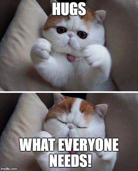 Cat Hug Meme - i need hugs cat imgflip