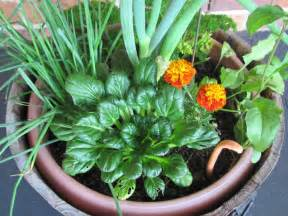 13 pictures to start vegetable gardening in planters