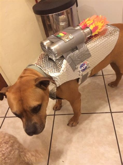 easy astronaut dog costume snapguide