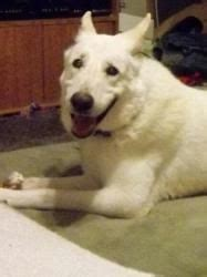 the dog house thorndale pa virginia german shepherd rescue we need a miracle less than 24 hours for this young