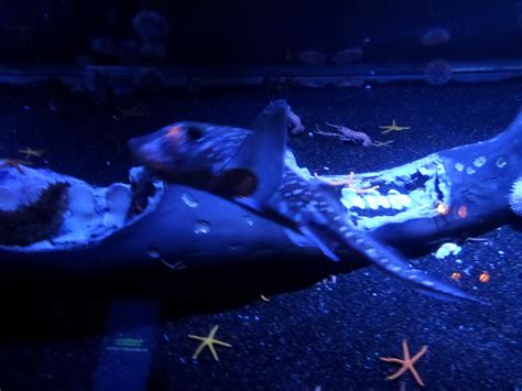 Hiasan Aquarium Orca Seal explore the largest at aquarium of the pacific family vacation hub