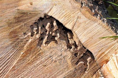 carpenter ants dead on floor purdue extension 4 h ffa career development event cde