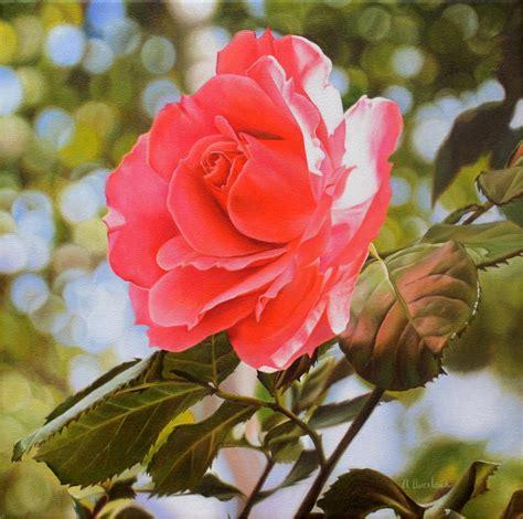 cuadros de rosas blancas cuadros pinturas oleos pinturas de rosas bonitas