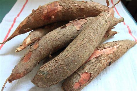 cassava veganlogy