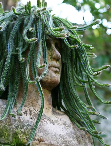 medusa planter medusa cactus imgur