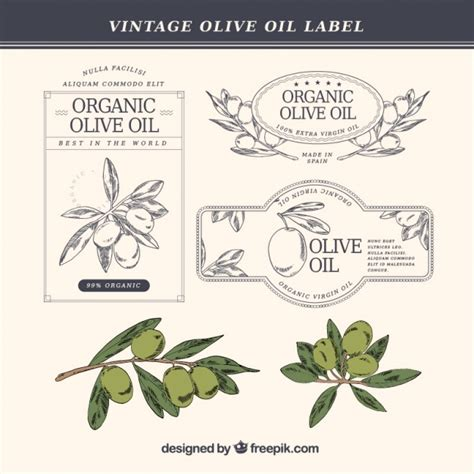hand drawn olive oil labels in vintage style vector free