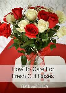 how to care for fresh cut roses time with thea