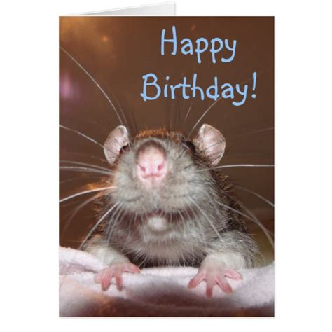 Rat Birthday Cards, Photo Card Templates, Invitations & More