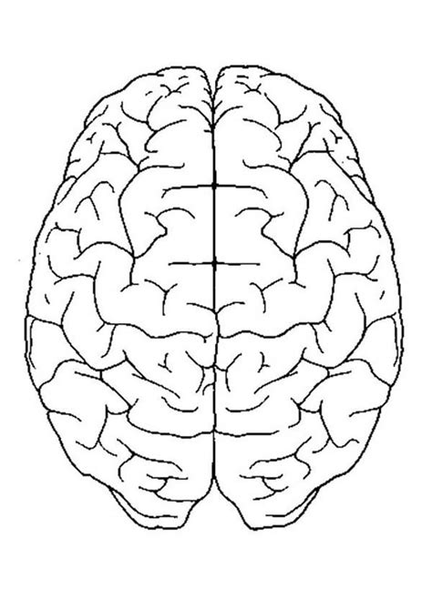 Free Printable Brain Coloring Pages Murderthestout Brain Coloring Pages To Print