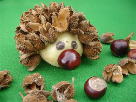 crafty   hedgehog  tree seeds  cases