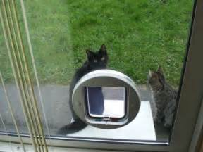 Installing A Cat Flap In A Glass Door Cat Flaps In Coventry Coventry Cat Flaps