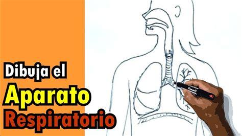 imagenes del sistema digestivo dibujo dibujos del cuerpo humano 2 9 c 243 mo dibujar el sistema