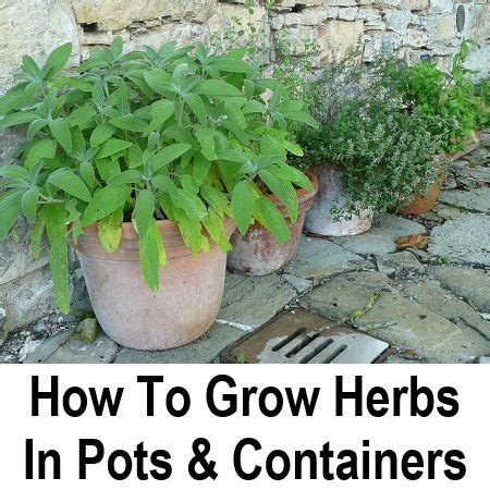 how to grow herbs how to grow herbs in containers garden herbs pinterest