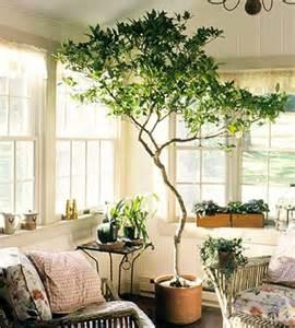 dear september i want an indoor tree