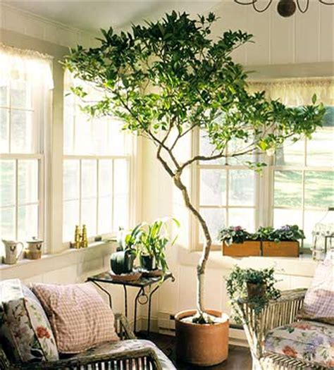 best indoor trees dear september i want an indoor tree