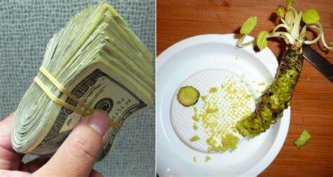 real wasabi      expensive crops