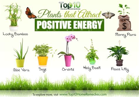 the best plants to bring life to your bathroom 10 plants that attract positive energy top 10 home remedies