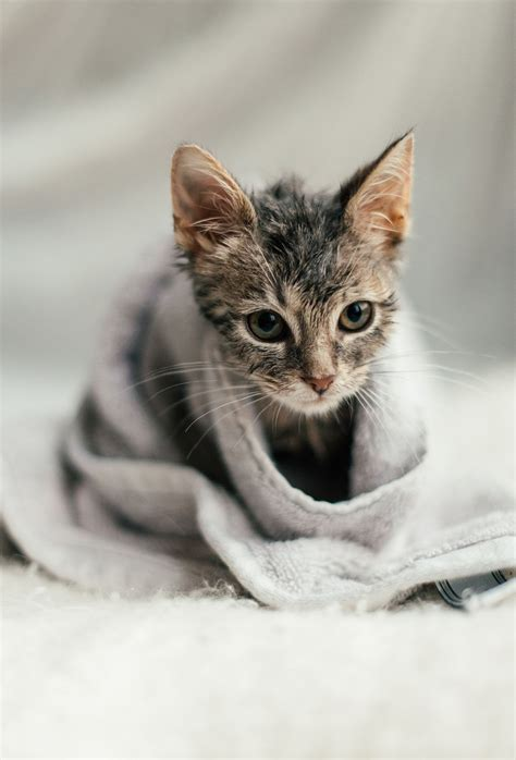 8 Tips On Bathing Your Feline by How To Bathe A Cat