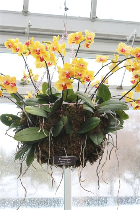 Indoor Plants No Sun gardening 101 how to care for an orchid gardenista