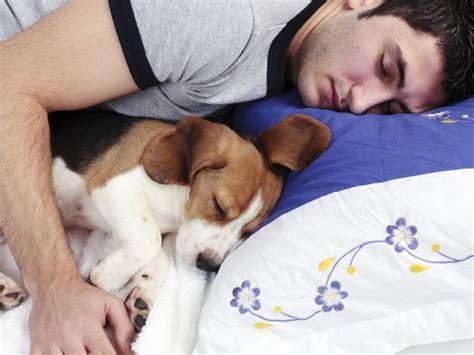 imagenes relajantes para dormir dormir con perros mejora la calidad del sue 241 o