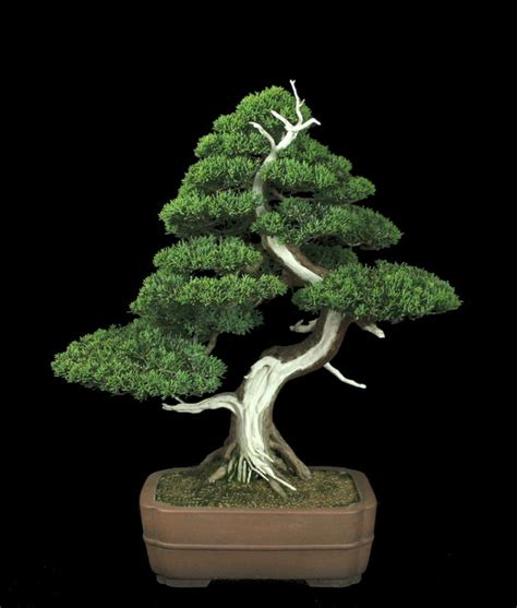the art of bonsai xemanhdep photos awesome pictures gallery