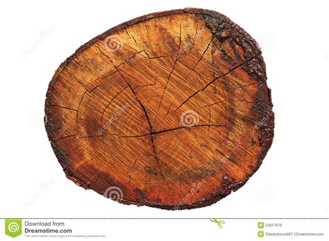 wood cross section wood cross section stock photo image 24017570