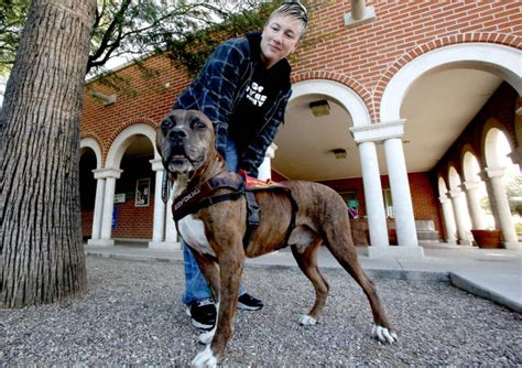pitbull service tucson service pit bull nominated as