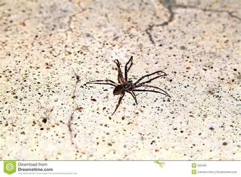 Spider Floor L Spider On Floor Stock Image Image Of Insect Spiders Details 322495