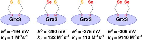 j protein research 2 a designed synthetic analogue of 4 ot is specific for a