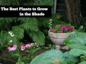 the best plants to grow in the shade mom prepares